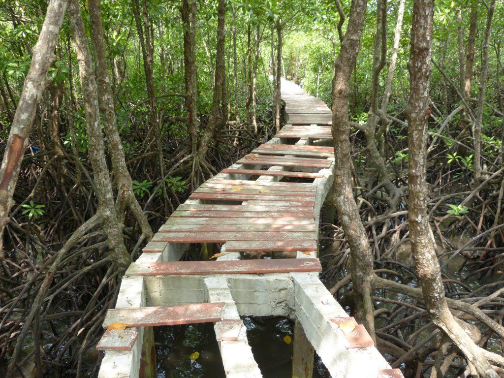 Koh Chang,mangrovy