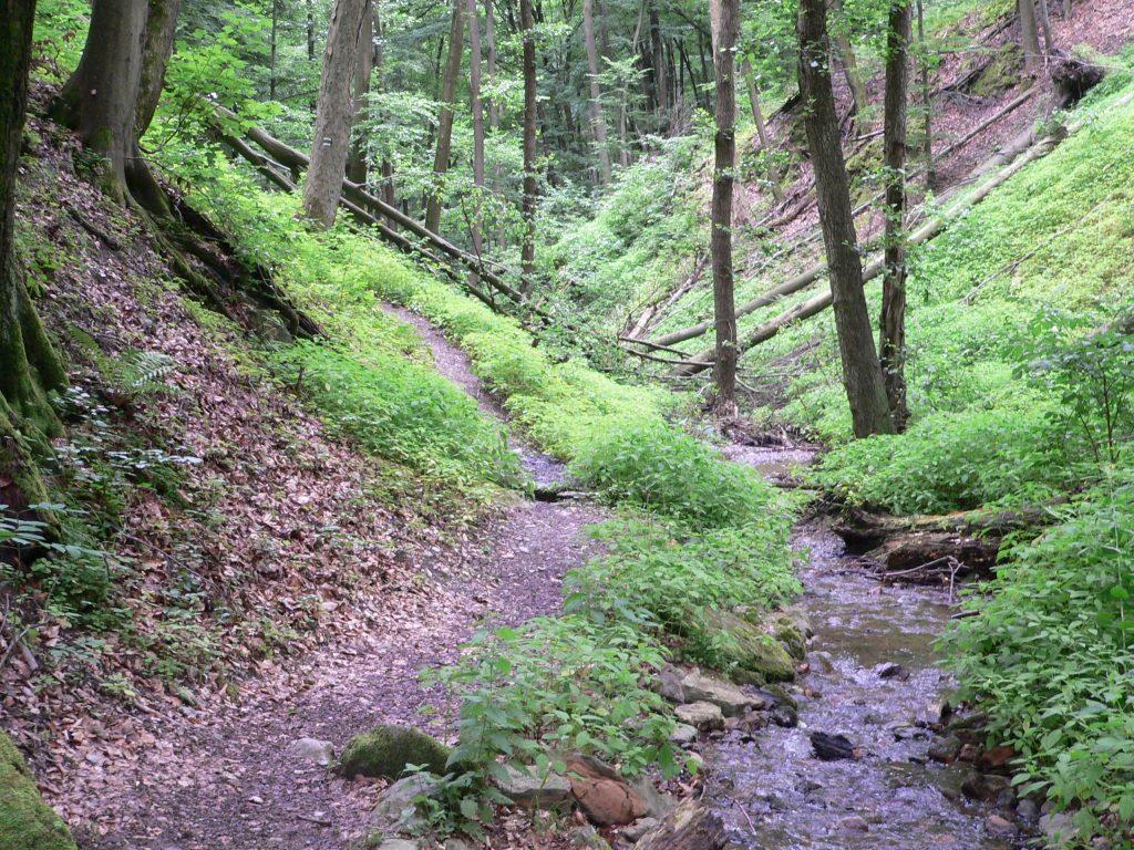 Sviniansky potok v Krásnej dolině