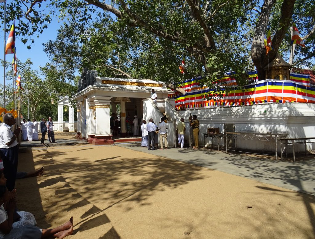 Anuradhapura,Jaya Sri Maha Bodhi