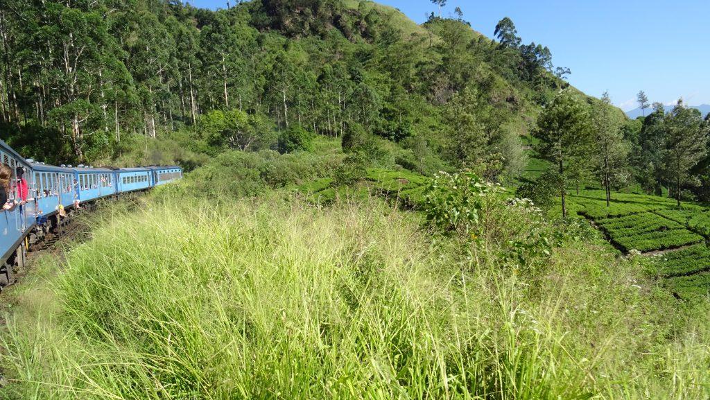 cesta vlakem Kandy - Nanu Oya,čajové plantáže