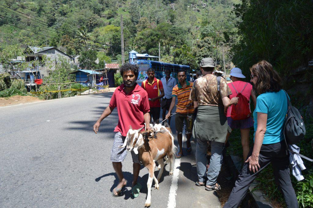 silnice k vodopádu Ramboda