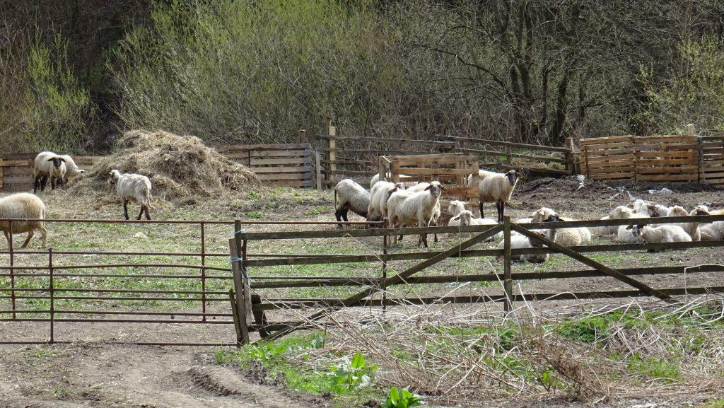 Ludrová,ovčín