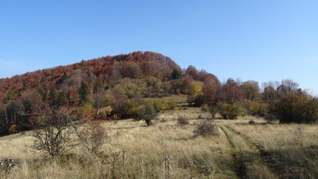 Čičerman (955m)