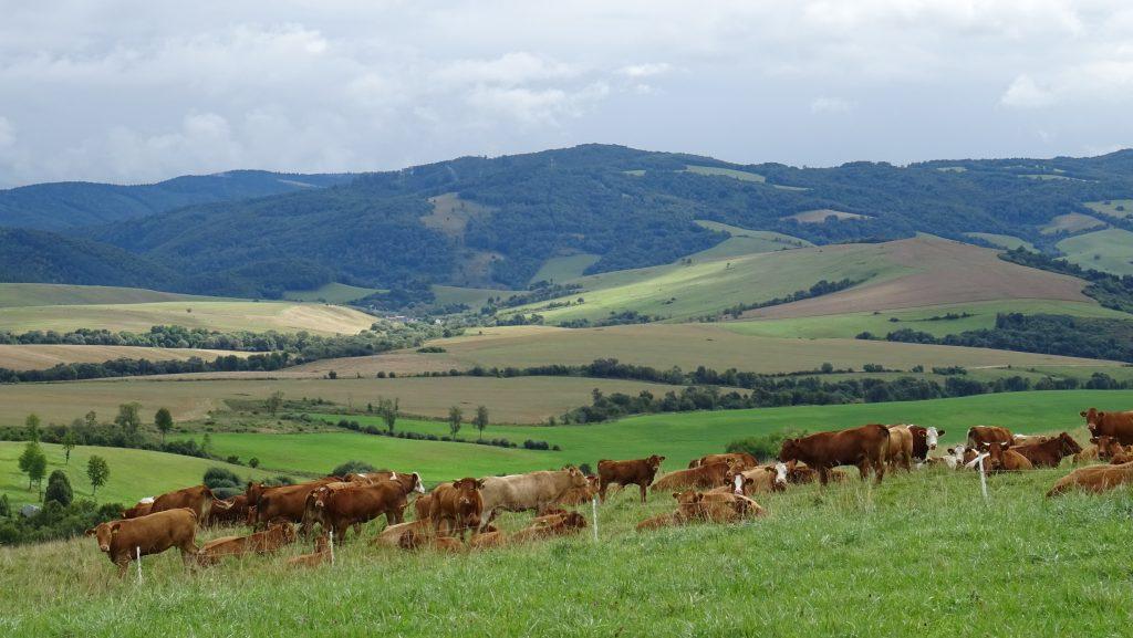 Lenartov,pastviny Pod úbočím