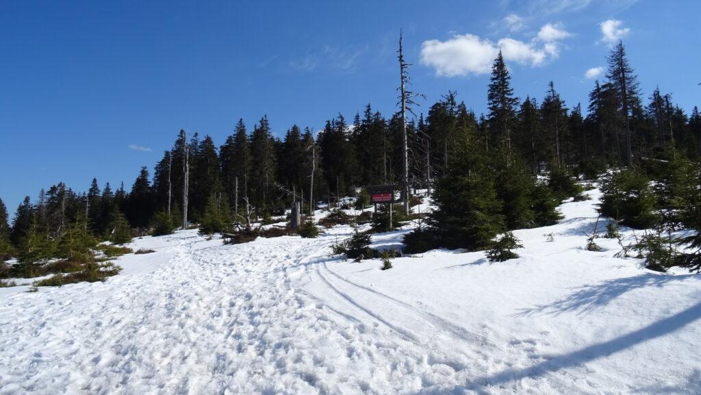 Králický Sněžník,severní úbočí